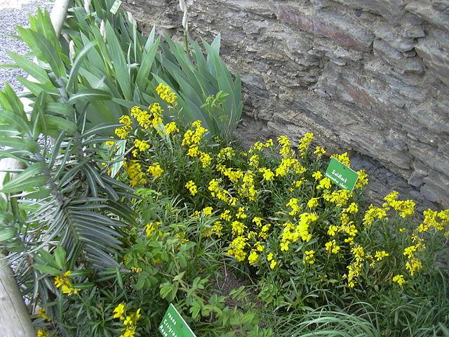 Herb Garden, from Gabriele Delhey, Wikimedia