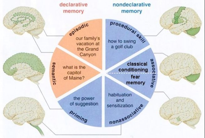 Types of Memory and Where That Memory is Stored, from Universe Review