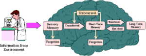 Memory Types. Sensory memory is often called Reflex memory and most put it into cingulate cortex, cerebellum, and spinal cord.