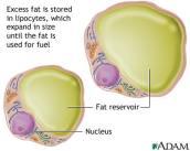 Fat Cells 400x320