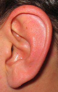 Human Left Ear, from David Benbennick at Wikimedia