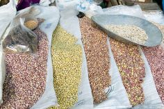 Various Beans, from Paul Asman and Jill Lenoble on Wikimedia
